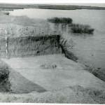 Bogata - Lac Gălățui, jud. Călărași, Campania 1956
