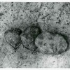 Boian-1-12-1959.jpg