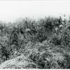 Boian-11-20-1958.jpg