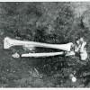 Boian-11-32-1958.jpg