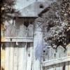 Bucov-1956-032.jpg