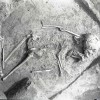Cunesti-Radovanu-1980-21.jpg