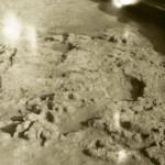 Radovanu, jud. Călărași, Situl arheologic ,,La Muscalu'', campania 1967