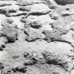 Radovanu, jud. Călărași, Situl arheologic ''la Muscalu'', Campania 1978