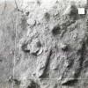 Radovanu-Calarasi-Muscalu-campania-1971-film-1-22.jpg