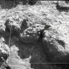 Radovanu-Calarasi-Muscalu-campania-1971-film-3-06.jpg