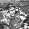 Radovanu-Calarasi-Muscalu-campania-1975-film-3-21.jpg