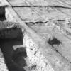 Radovanu-Calarasi-Muscalu-campania-1975-film-3-31.jpg